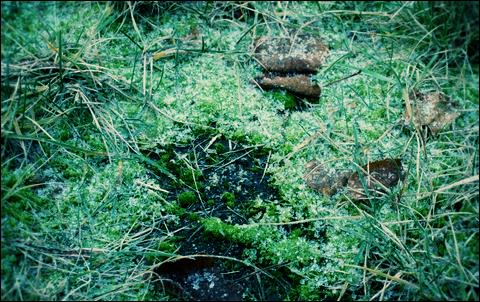 http://anadyomene.cowblog.fr/images/Brouillard/005JPGeffected.png