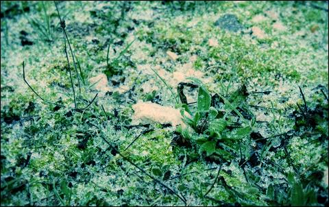 http://anadyomene.cowblog.fr/images/Brouillard/007JPGeffected.png