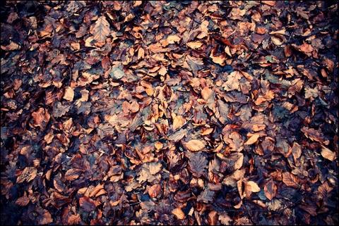 http://anadyomene.cowblog.fr/images/Foret/032JPGeffected.jpg