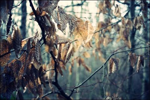 http://anadyomene.cowblog.fr/images/Foret/070JPGeffected.jpg