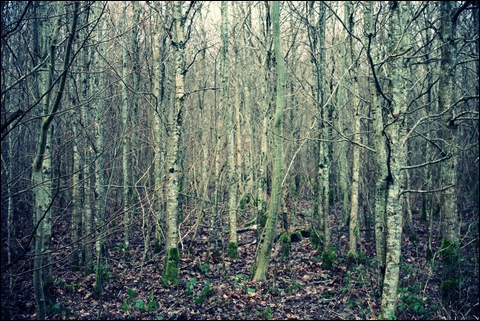 http://anadyomene.cowblog.fr/images/Foret/072JPGeffected.jpg