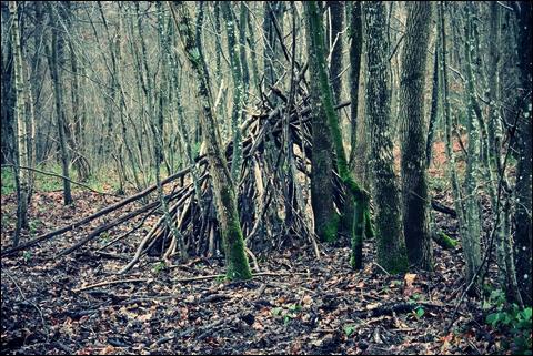 http://anadyomene.cowblog.fr/images/Foret/091JPGeffected.jpg