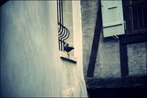 http://anadyomene.cowblog.fr/images/Geneve/227JPG.png