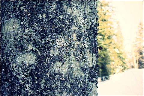 http://anadyomene.cowblog.fr/images/Jura/112JPGeffected.jpg