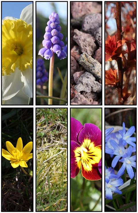 http://anadyomene.cowblog.fr/images/Nature/fleur.jpg