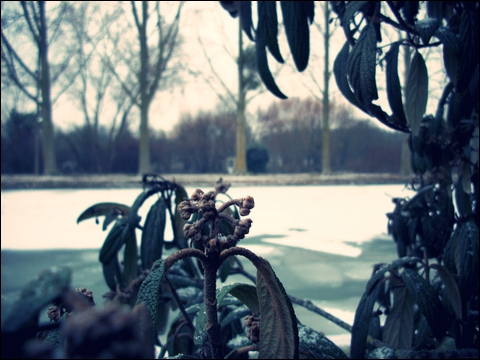 http://anadyomene.cowblog.fr/images/Reims/1000428jpgeffected.jpg